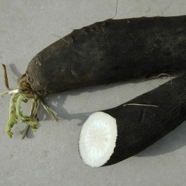 EPS Radis noir (150ml)