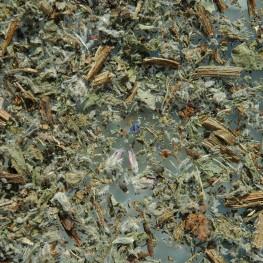 Bourrache sommité fleurie (100g)